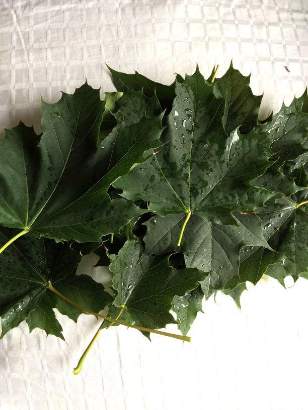 rsz_leaves_web