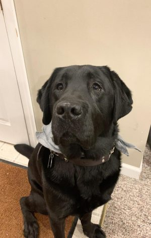Pet Spotlight: Wings the service dog acts as his owner's eyes around campus