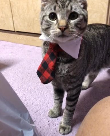 Thiccy all dressed up in his business casual Photo courtesy of Brianna Rivera